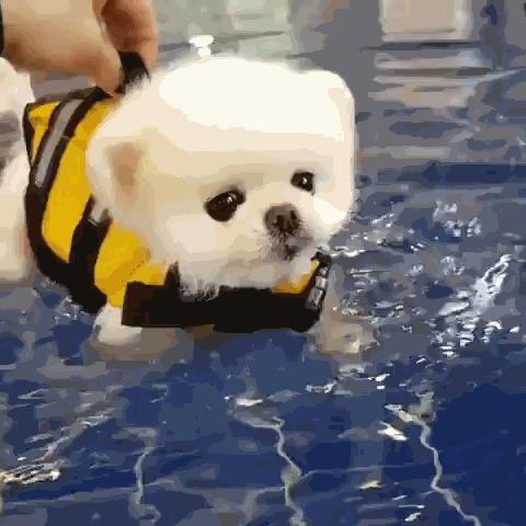 Щенок плавает.