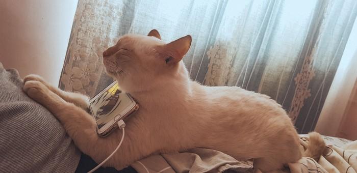 Котик- помоготик Кот, Помощь, Добро, Самоотдача, Сиамский кот, Подобрали, Благодарность