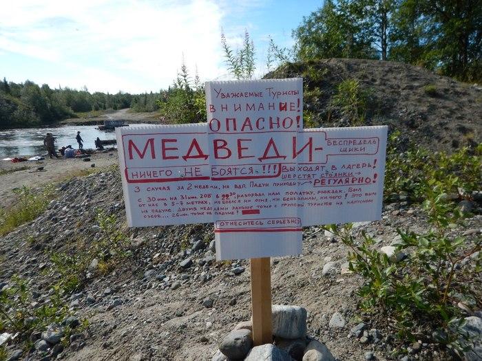 Встреча с медведем Поход, Туристы, Медведь, Сплав, Сплав по реке, Катамаран, Длиннопост