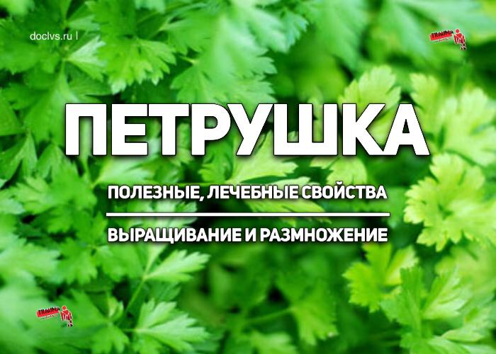 Петрушка: полезные, лечебные свойства; Петрушка, Полезное