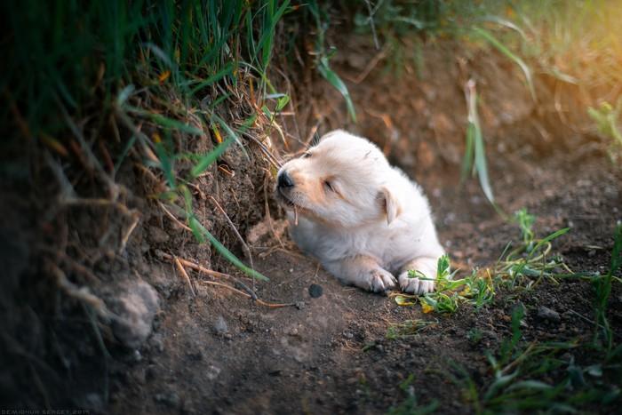 А у кого-то первая Весна) Фотография, Щенки, Животные, Жизнь, Гармония, Начало, Портрет, Nikon
