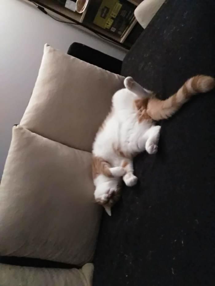 Обычный день кота Кот, Толстый, Рыжие, Длиннопост