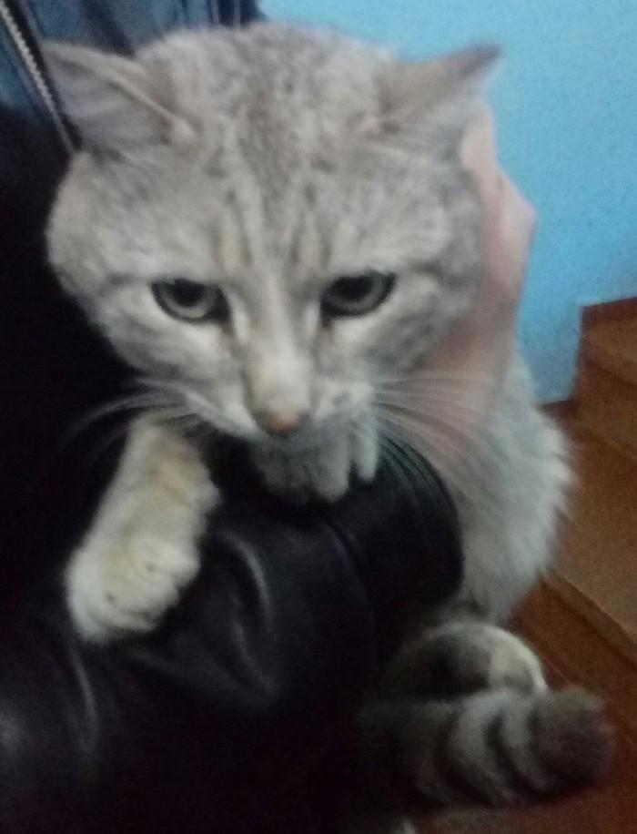 Дарю кота Сила Пикабу, Иркутск, Котомафия, В добрые руки, Ищет семью, Без рейтинга, Кот, Помощь