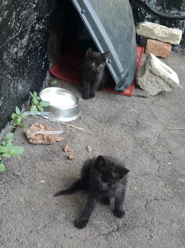Выжил вопреки всему! Ищем дом! В добрые руки, Кот, Помощь, Бездомные животные, Доброта, Длиннопост