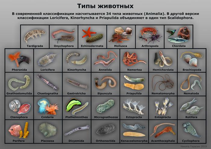 Типы животных