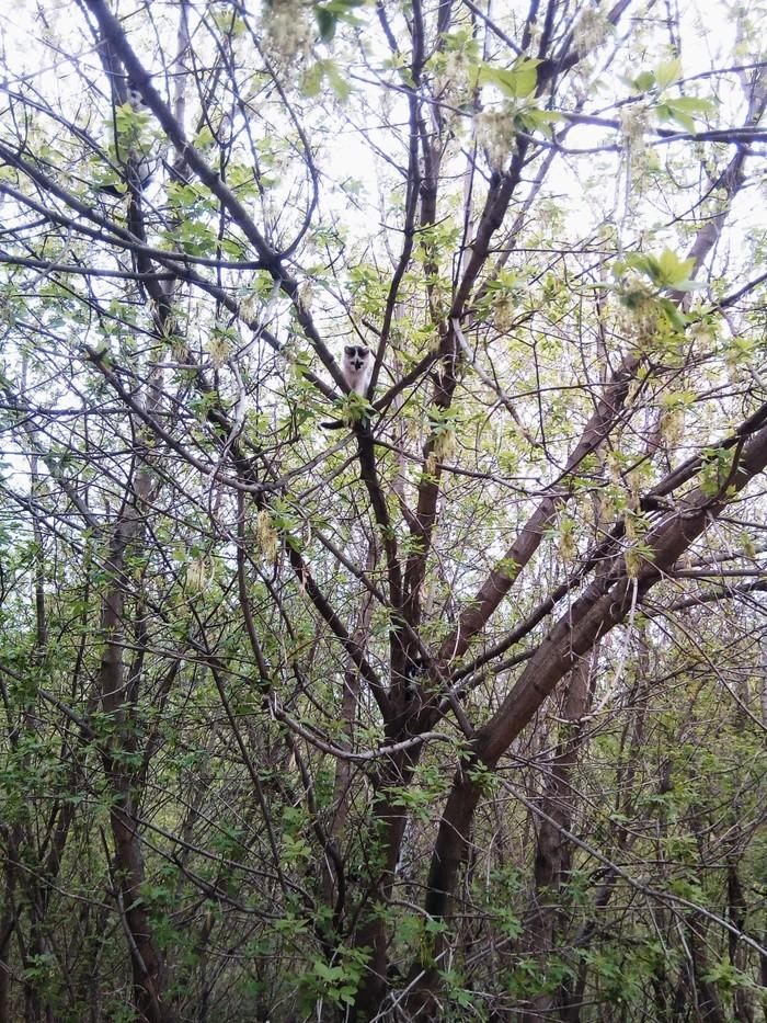 Найди кота! Весна, Мартовские коты, Котомафия, Кот, Дерево