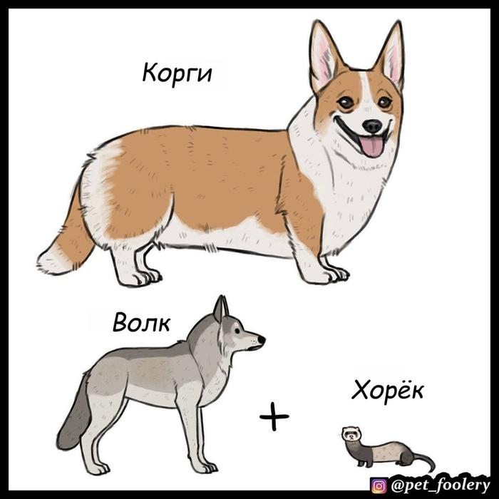 Волк и собаки Pet Foolery, Собака, Волк, Длиннопост