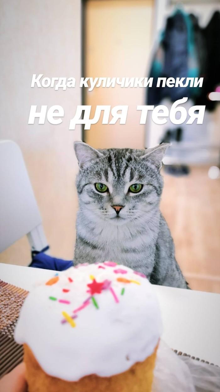 В - Выдержка кота Пасха, Кот, Котомафия, Толстые котики