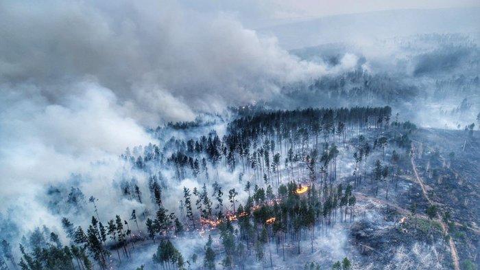 Лесные пожары в Сибири Лес, Пожар, Сибирь