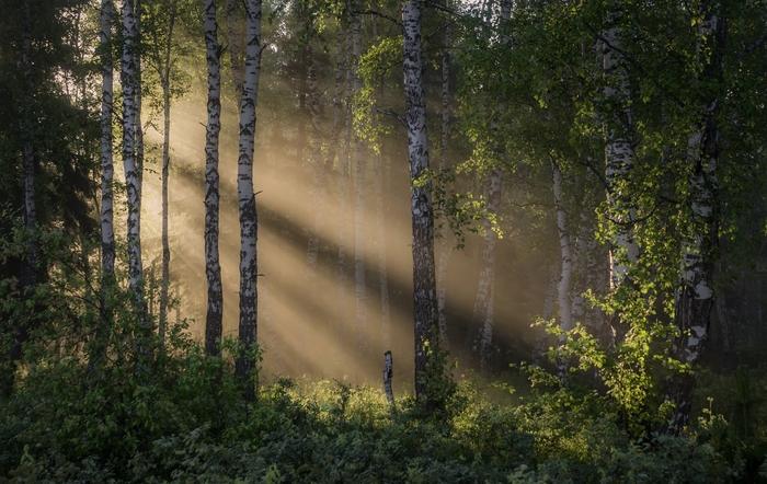Сказочный лес Фотография, Красота природы, Россия