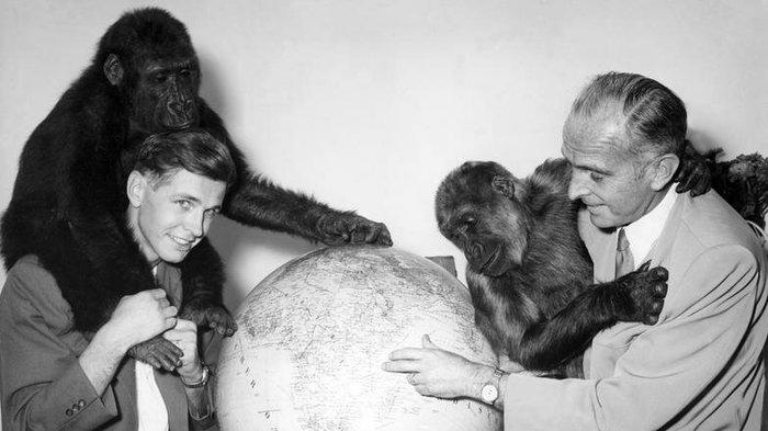Бернгард Гржимек: человек, который любил животных Бернгард Гржимек, Животные, Дикая природа, Зоопарк, Африка, Дикие животные, Длиннопост