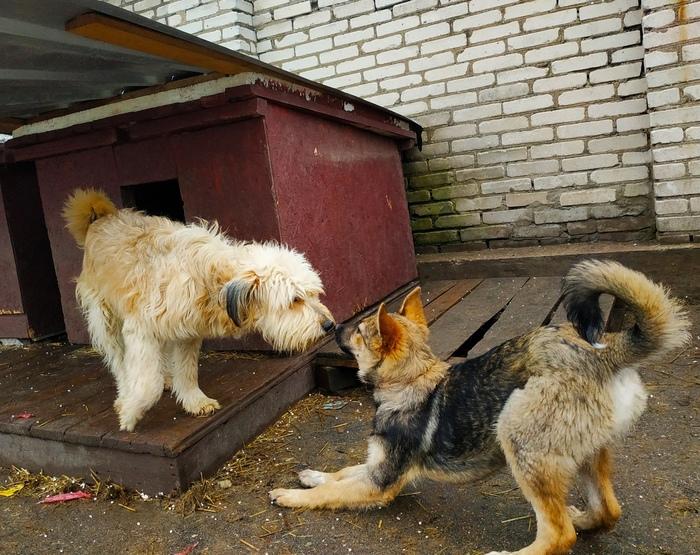 """""""ШАНС"""" - зоозащитная организация г. Пскова. Без рейтинга, Ветеринария, Лекарства, Помощь, Бродячие собаки, Помощь животным, Кот, Длиннопост"""