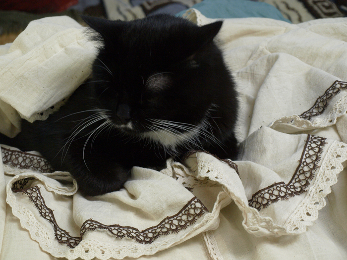 Котики и пошив #1 Кот, Милота, Рукоделие, Кружева, Длиннопост