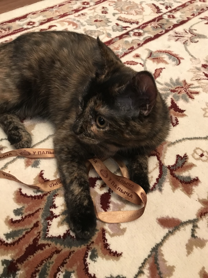 Пропала кошка, Обнинск [Кошка нашлась] Кот, Потерялся кот