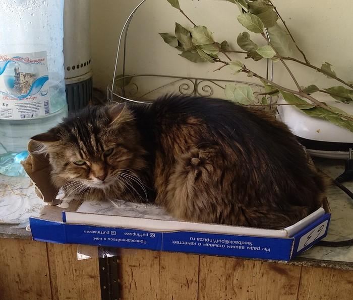 У всех коты любят большие коробки... Кот, Котомафия, Коробка