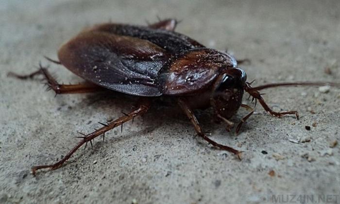 Сумасшедший «Тараканий челлендж»: люди делают селфи с тараканами на лице Селфи, Социальные сети, Тараканы, Странности, Люди, Новости, Challenge