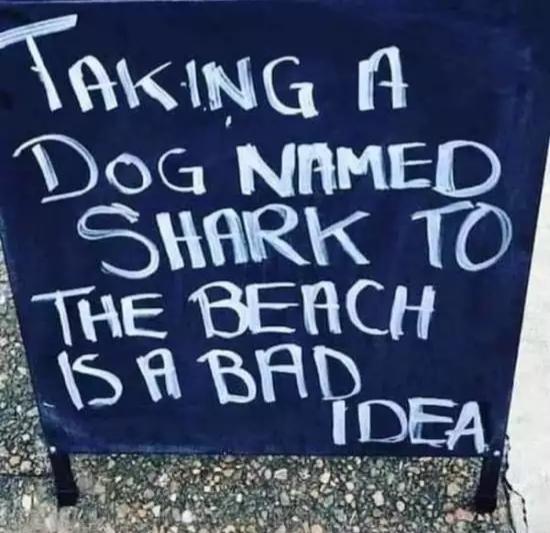 Плохая идея приводить собаку по кличке Акула на пляж