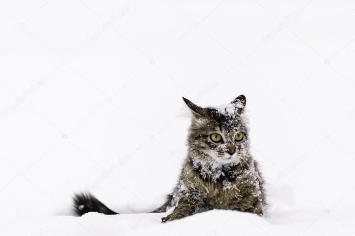 Кот в снегу