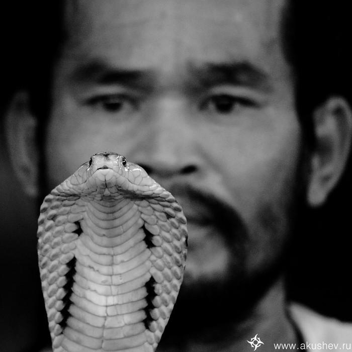 Заклинатель змей.