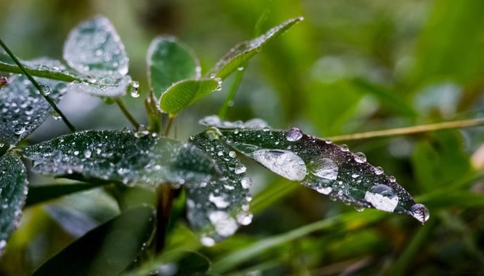 После дождя.. Гелиос 44-2, Helios, Nikon, Макро, Фотография, Беларусь, Бобруйск, Роса, Длиннопост
