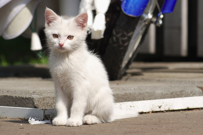 Котенок из Измайловского парка Pentax, Котята, Измайловский парк, Кот