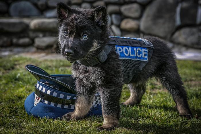 Новобранец полиции Новой Зеландии