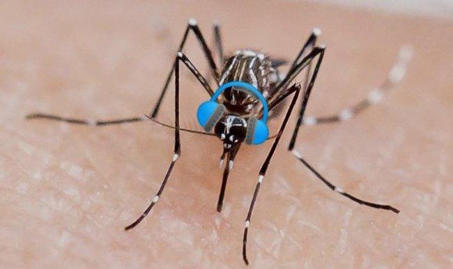 Комары не переносят музыку Skrillex! Комары, Размножение, Музыка, Skrillex, Исследование, Видео