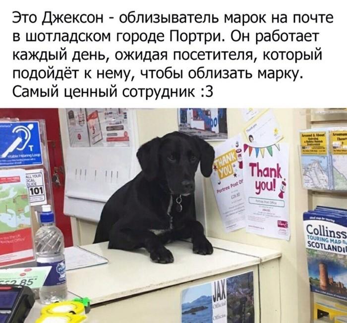 То чувство , когда собака в Шотландии полезнее наших сотрудников почты России