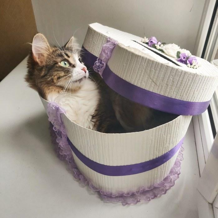 Кошь Котомафия, Коробка и кот, Кот