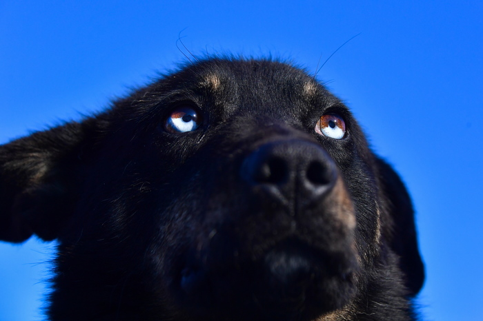 Полиция задержала мужчину, который выкинул собаку с четвертого этажа Негатив, Происшествие, Собака, Собаки и люди, Животные, Санкт-Петербург