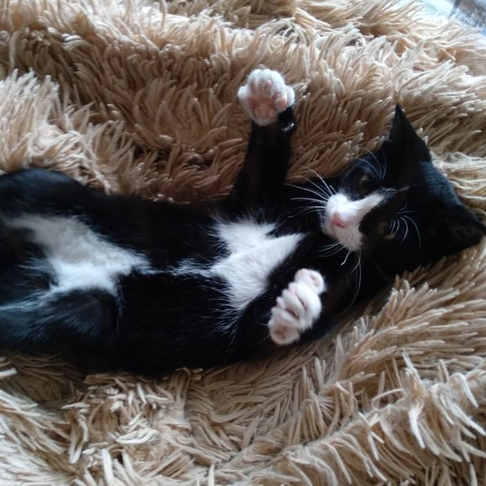 Кошка-ебобошка. Лучшее Кот, Котомафия, Забавное, Милота, Длиннопост