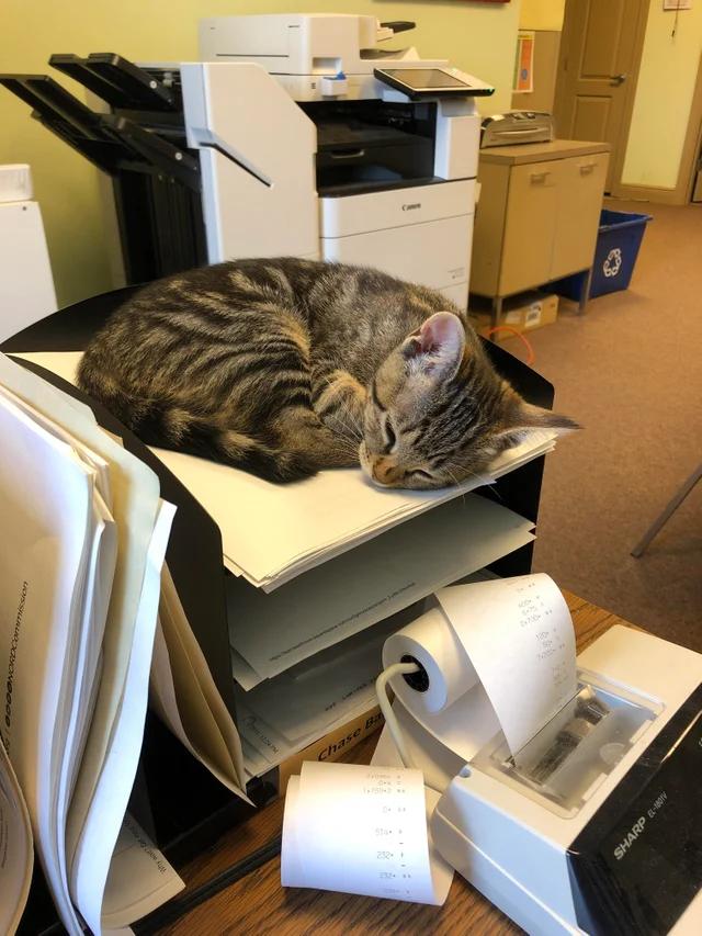 ГлавБух нашего предприятия. Готовила к сдаче годовой отчёт, но устала. И уснула.