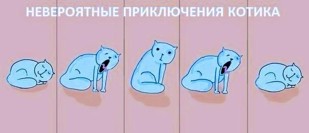 Невероятные приключения котика.