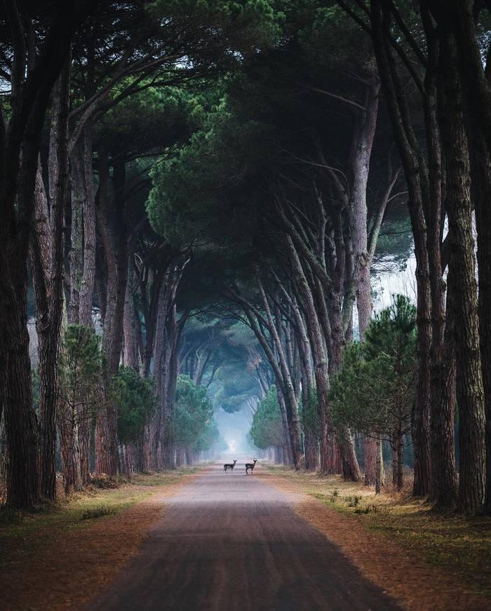 Пиза, Италия Фотография, Красота, Красота природы, Пиза, Италия