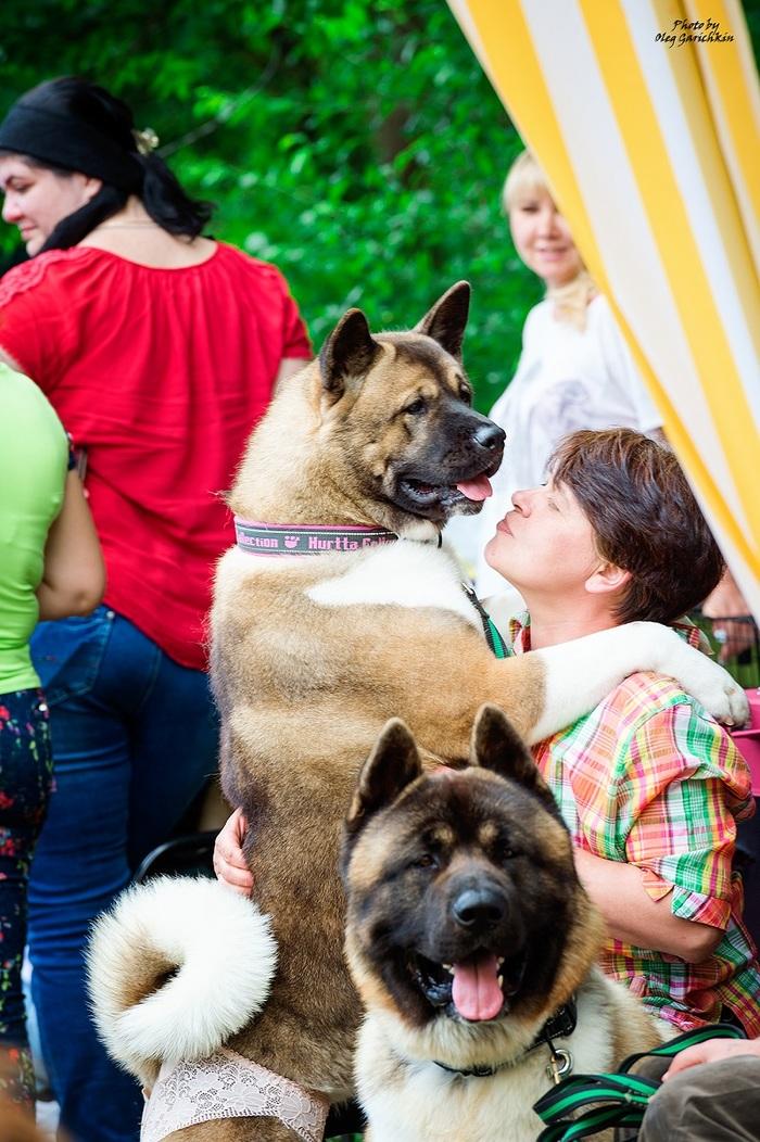 Очередная серия репортажных снимков с выставок собак, прошедших по Югу России в 2018 году, приятного просмотра))) Собака, Собаки и люди, Выставка собак, Собачьи будни, Собачники, Анималистика, Длиннопост