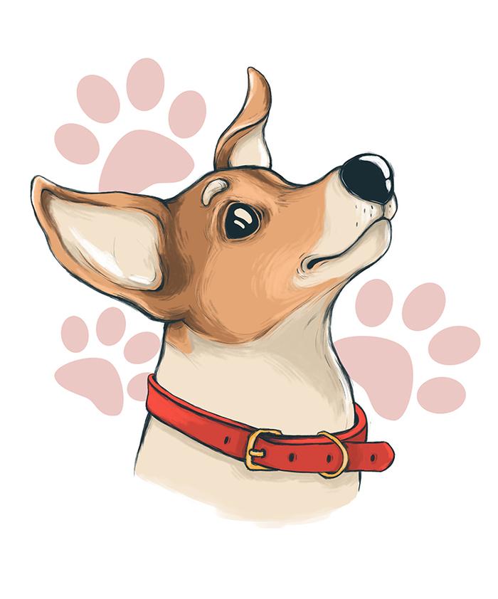 Джек Рассел Собака, Джек-Рассел-Терьер, Photoshop, Рисунок, Бобёр рисует, Цифровой рисунок, Животные, Анималистика