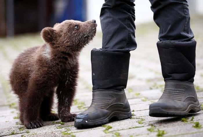 Осиротевший медвежонок в приюте, Босния и Герцеговина
