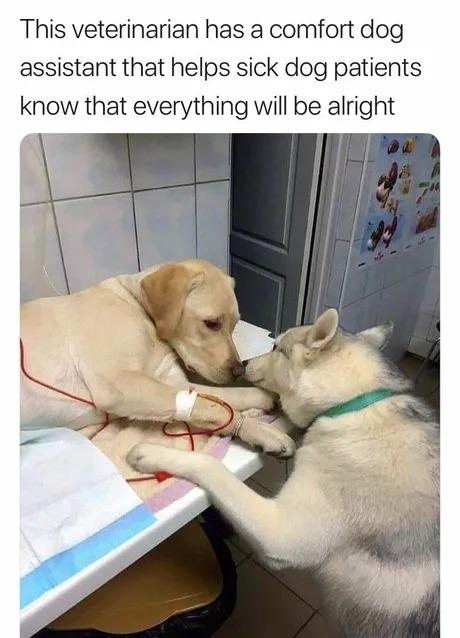 Всё будет нормально Домашние животные, Собака, Ветеринар, Милота, Поддержка, Картинка с текстом, Ассистент