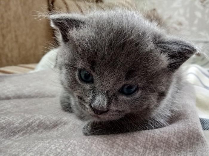 Просто котята Котята, Деревня, Милота, Длиннопост, Кот