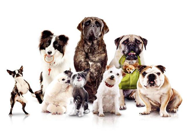Как правильно выбрать собаку? Собака, Питомец