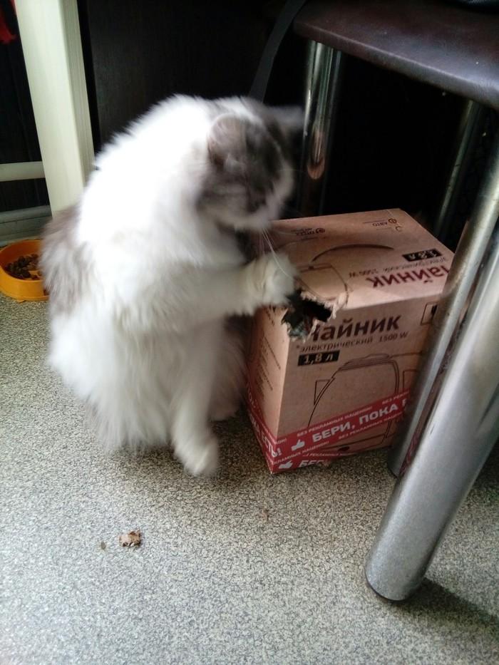Месть. Кот, Месть, Ярость, Длиннопост, Коробка и кот