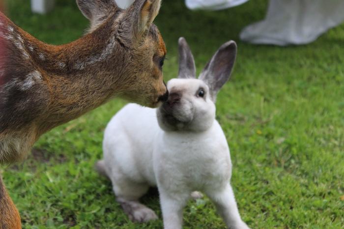 Кролик и косуля