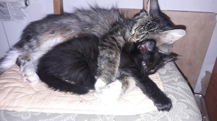 Отдам полностью чёрного котенка.Г.Казань Кот, Котята, Длиннопост, Помощь животным