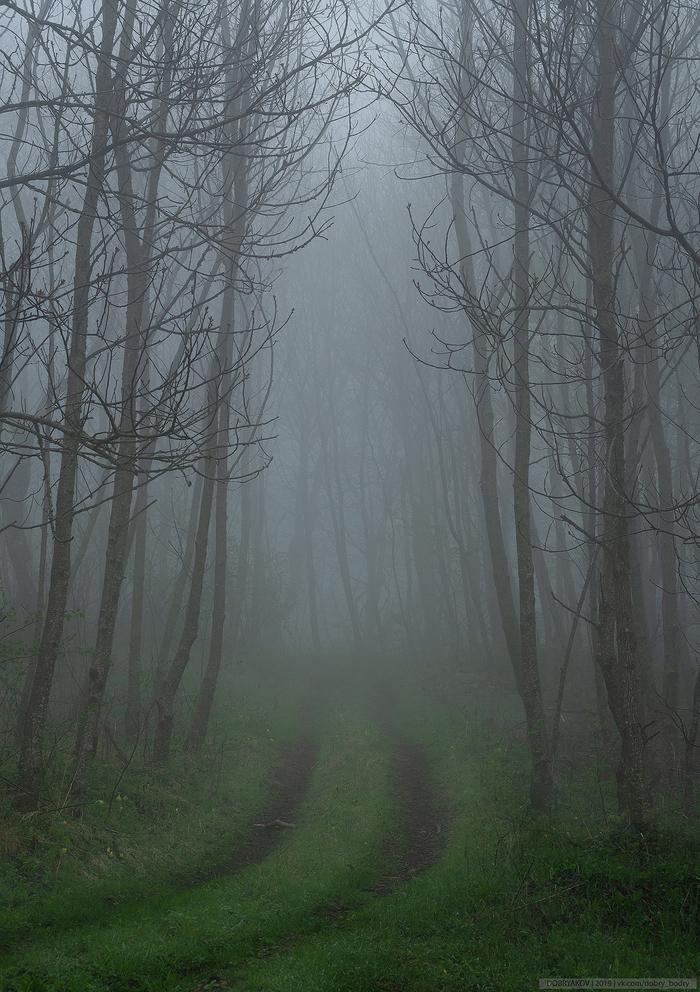 Туманы Дилижана Пейзаж, Лес, Туман, Nikon, Армения, Фотография