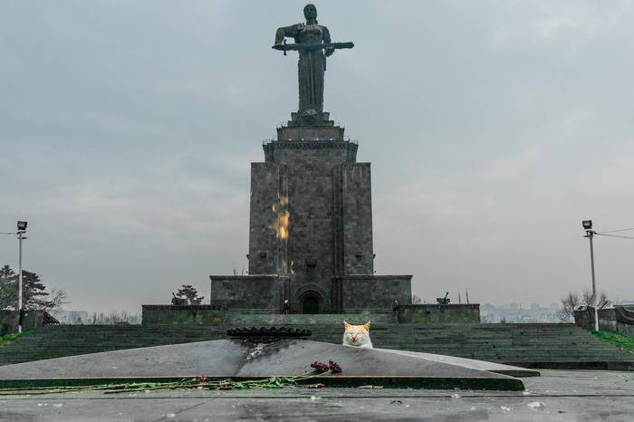 Почётный караул у Вечного огня в Ереване Ереван, Вечный огонь, Кот