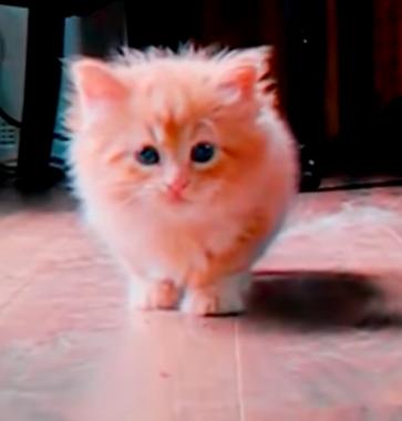 Вам этот котенок не напоминает Маколея Калкина?