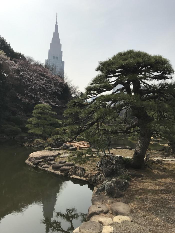 Парк Синдзюку, Токио