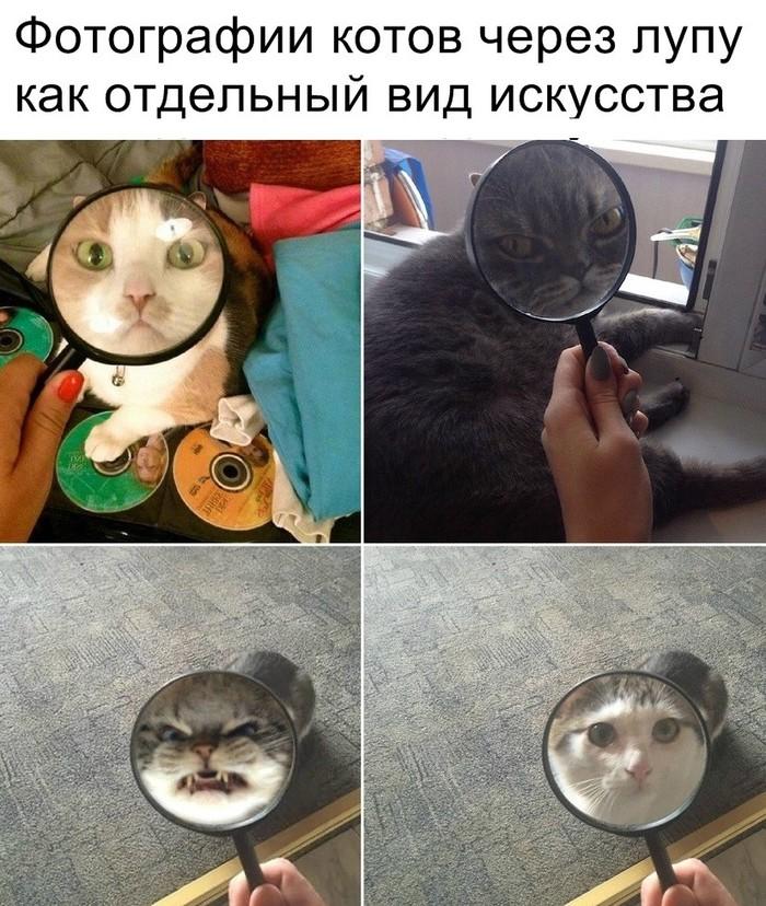 Для всех котоманов)