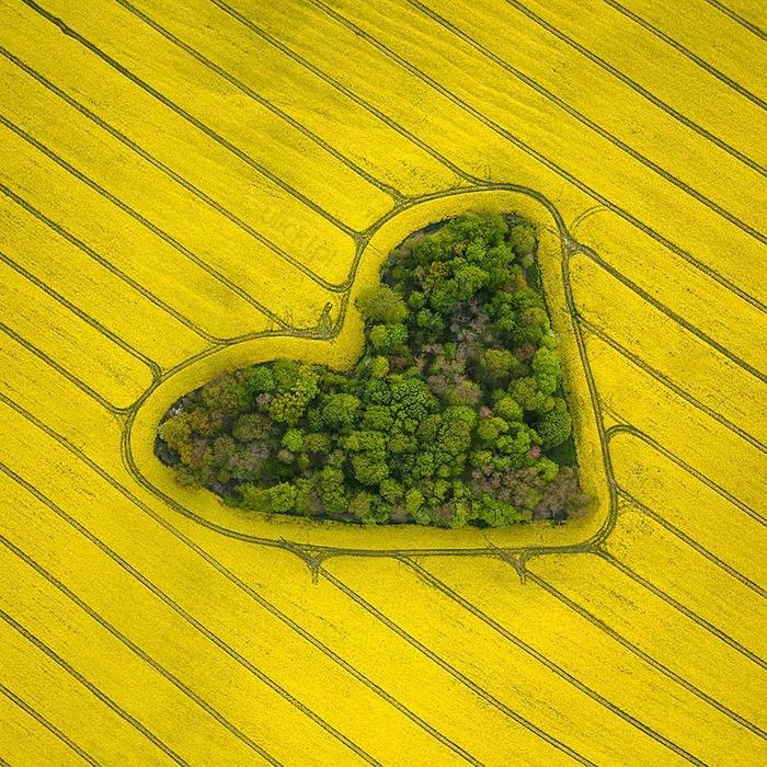 Хочу все знать #237. Дрон в Польше сфотографировал «рощу любви» в форме сердца. Хочу все знать, Польша, Вроцлав, Поле, Роща, Сердце, Длиннопост, Фотография