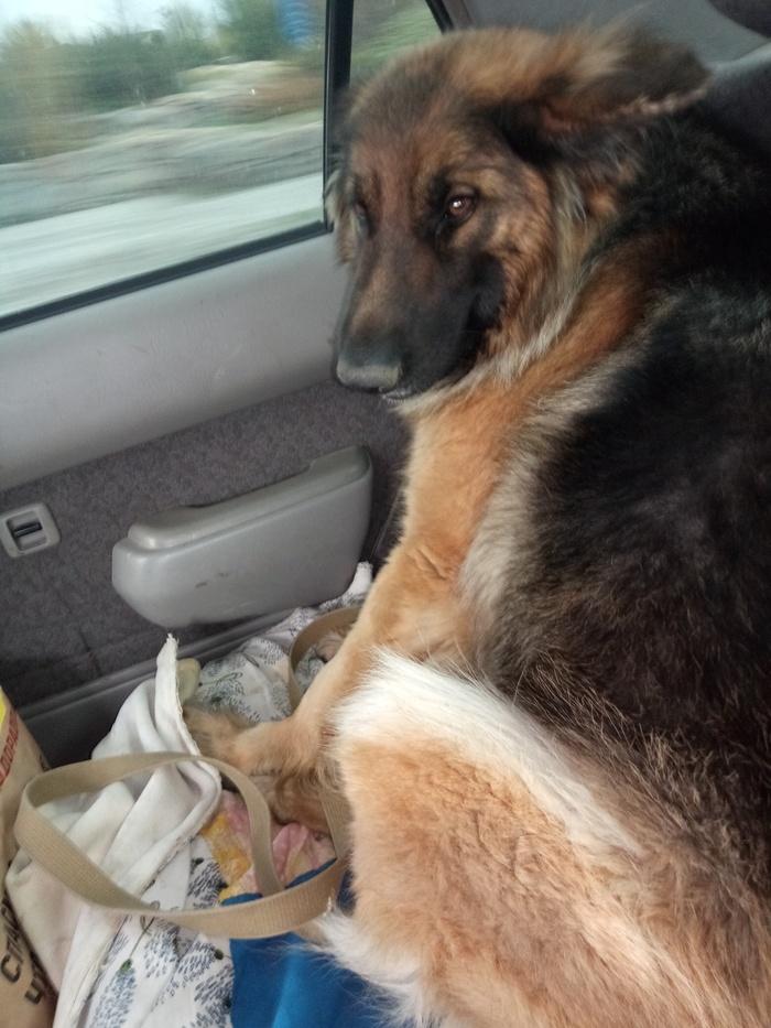 Обиженка Собака, Питомец